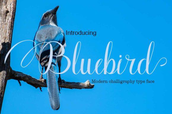 Bluebird花体婚礼手写连笔英文字体下载