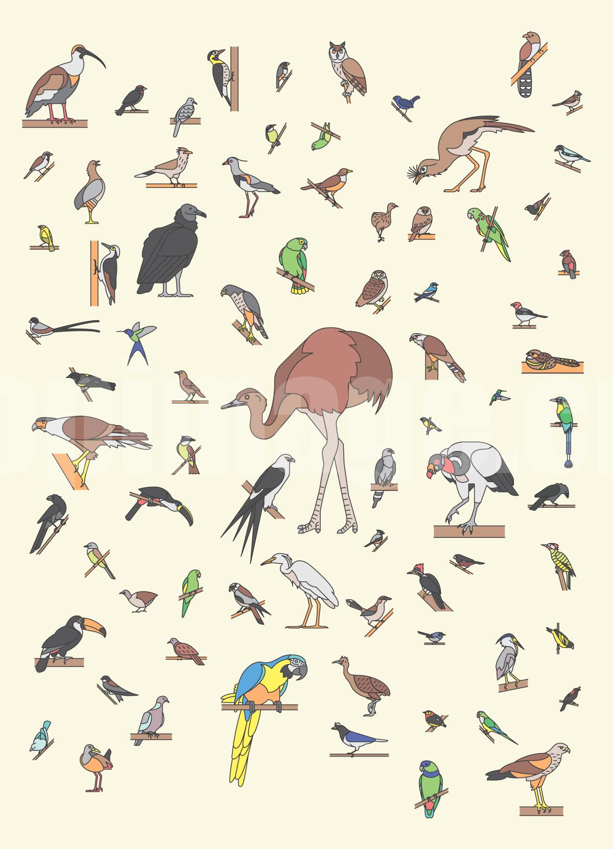 最全的鸟类 icon 鹦鹉 鸵鸟 喜鹊猫头鹰 图标源文件下载