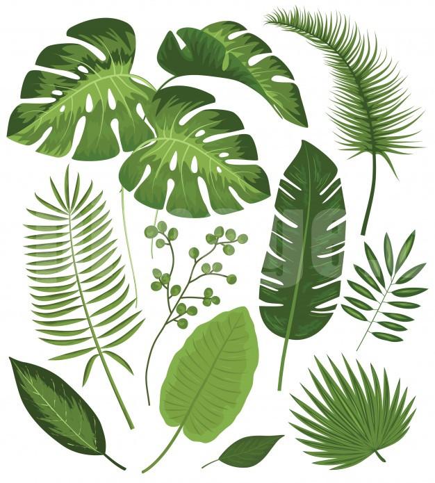 芭蕉夏季热带植物树叶矢量素材源文件下载