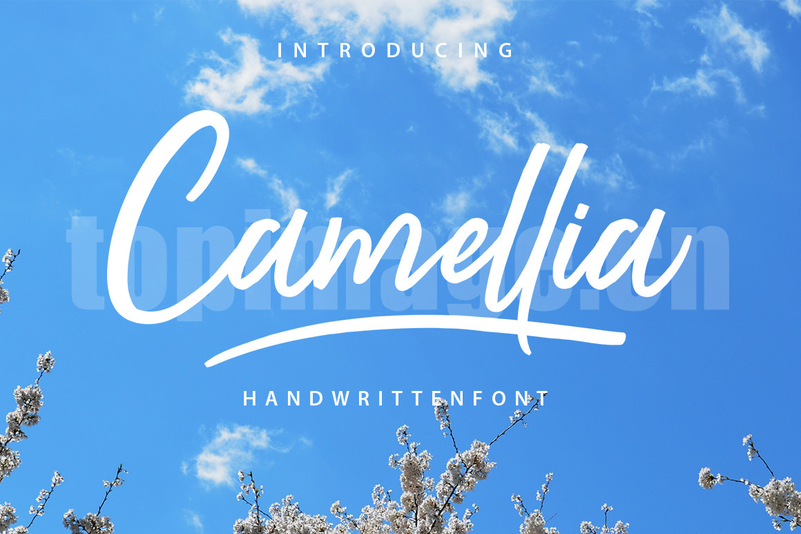 Camellia手写手绘连笔签名英文艺术字体下载